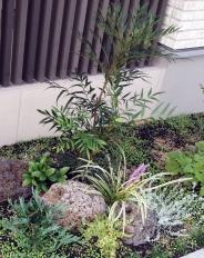 低木のナリヒラナンテンや常緑メインの下草たちです